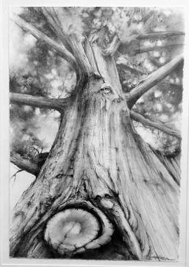 "Kathy Gomric, Millstadt, IL. Forest Peepers. 2012. Graphite on Paper, 28""x22"". $800."