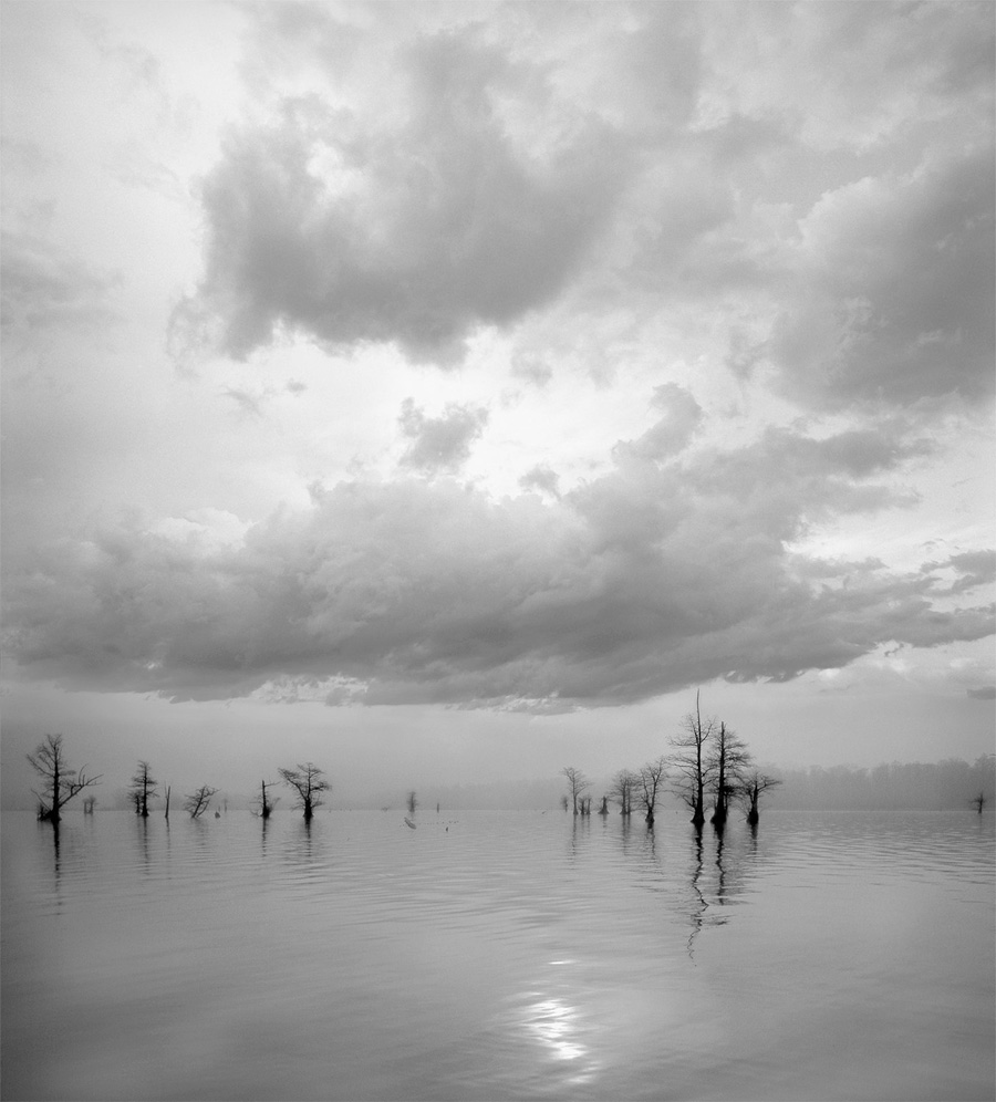 "William Turner, St. Louis, MO. Reelfoot From Canoe. 2012. Photograph, 25""x23"". $290."