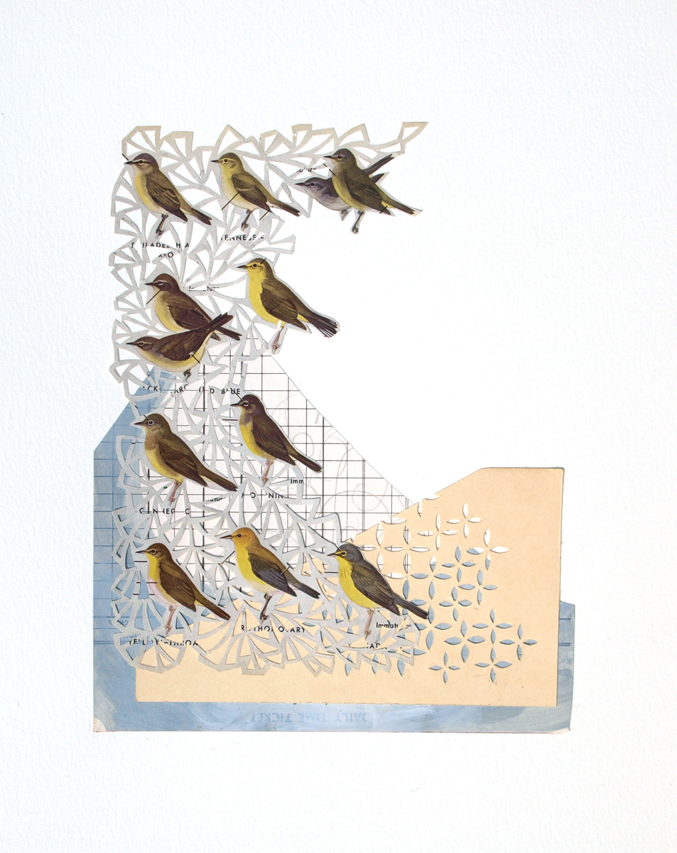 "Adrian Aquilino, Richmond Heights, MO. ""Birds of America #2."" 2015. Cut Paper, Collage, 20""x16"". $250."