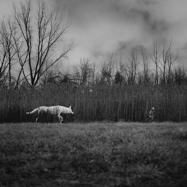 "Bradley Phillips, Cape Girardeau, MO. ""Boy and Wolf."" 2012. Photograph on Paper, 28""x28"". SOLD."