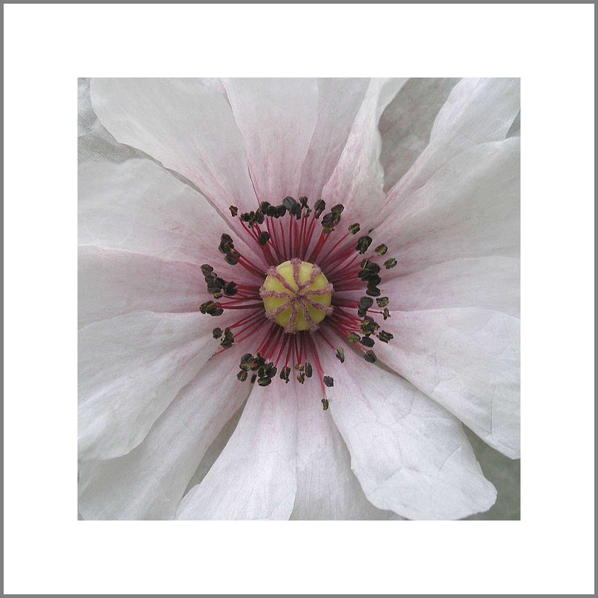 "Linda Wiggen Kraft, University City, MO. ""Poppy Mandala."" 2012. Photograph, 24""x24"". $700."
